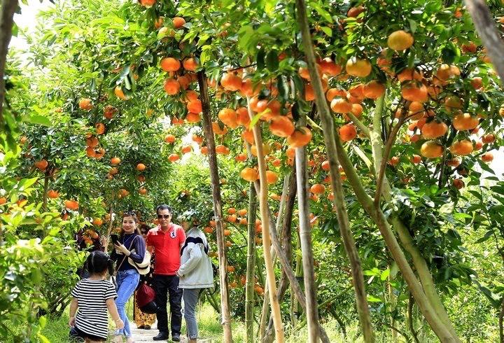 Xây dựng thương hiệu du lịch nông nghiệp để phát triển kinh tế xã hội