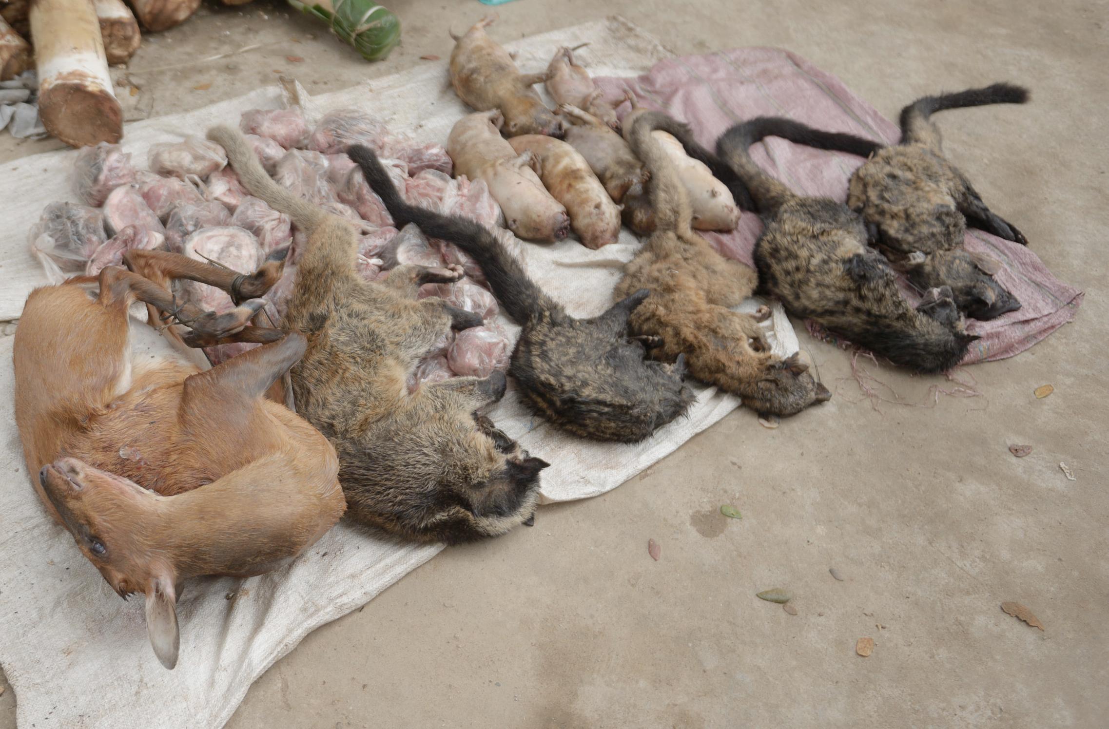 Tuyên bố của WWF về đóng cửa các thị trường buôn bán các loài hoang dã trái pháp luật trên toàn châu Á – Thái Bình Dương