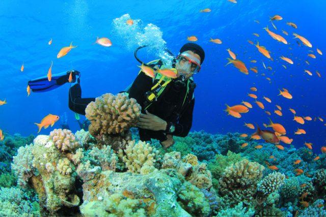 Đảo Cá Voi Nha Trang được bình chọn 10 điểm lặn biển đẹp nhất thế giới năm 2020