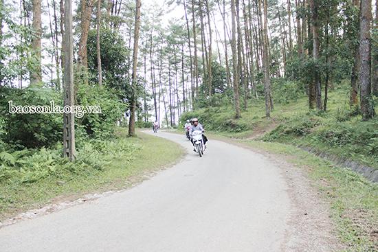 Sơn La: Khai thác tiềm năng du lịch rừng thông Noong Cốp