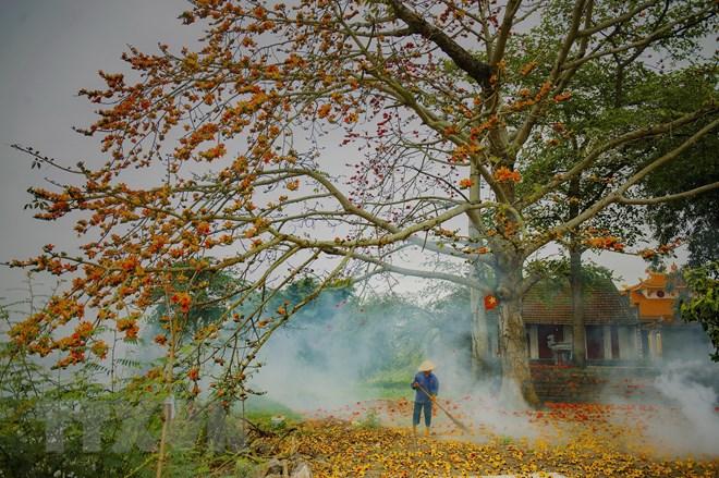 Khám phá mùa hoa gạo thắp lửa đỏ trời tháng Ba làm mê mẩn giới trẻ
