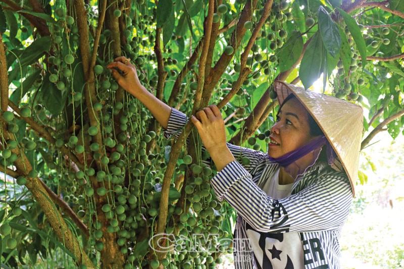 Trang trại xanh ở Cà Mau làm du lịch