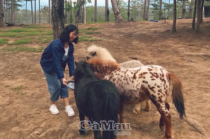 Trải nghiệm thú vị cùng vườn thú Zoodoo ở Lâm Đồng