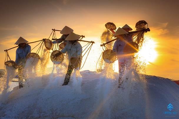 Vẻ đẹp rất riêng của cánh đồng muối tại Ninh Thuận