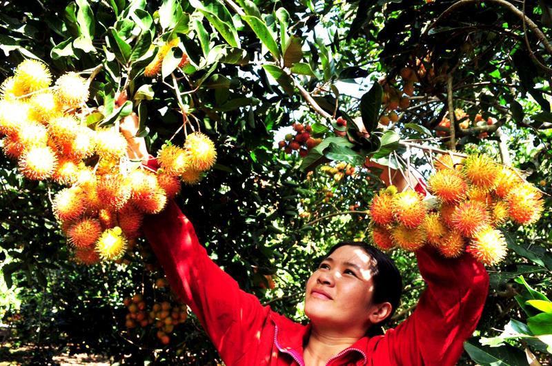 Lễ hội Trái cây Long Khánh lần thứ III năm 2020
