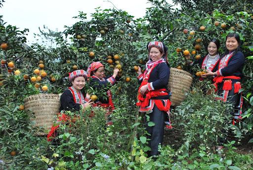 Tiềm năng phát triển du lịch nông nghiệp ở Hà Giang