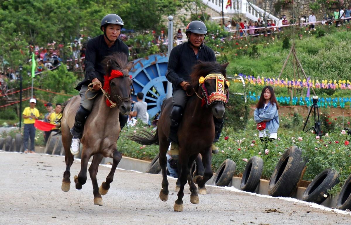 Giải đua ngựa truyền thống Bắc Hà - lễ hội đặc sắc vùng Tây Bắc