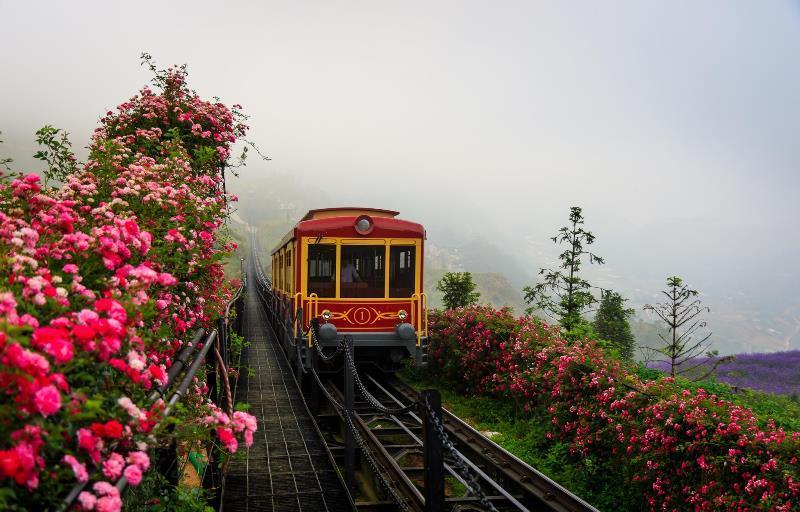 Sun World Fansipan Legend đón nhận kỷ lục thung lũng hoa hồng lớn nhất Việt Nam