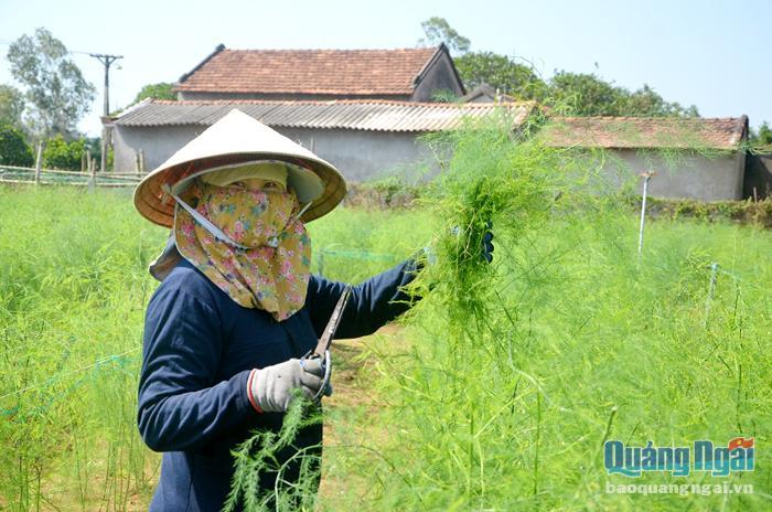 Quảng Ngãi: Xây dựng vườn mẫu làm du lịch cộng đồng