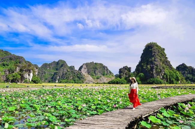 Ninh Bình: Con đường gỗ giữa hồ sen ở Hang Múa gây sốt vì vẻ lãng mạn