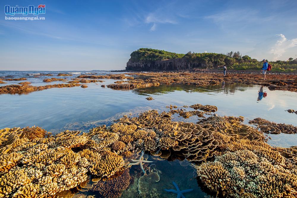 Mê mẩn với vẻ đẹp của rừng san hô lộ thiên ở Gành Yến (Quảng Ngãi)