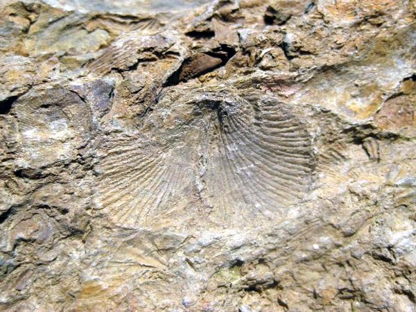 Bảo tồn, phát huy giá trị di sản địa chất ở CVĐC Toàn cầu Cao nguyên đá Đồng Văn