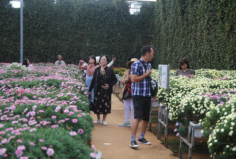 Du lịch canh nông vùng hoa công nghệ cao ở TP. Đà Lạt