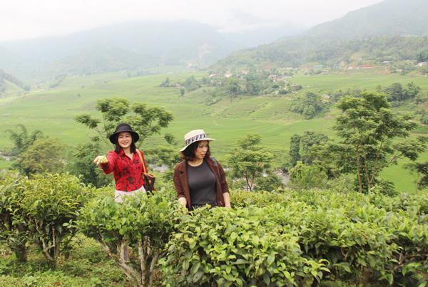 Lào Cai: Cần đầu tư phát triển du lịch nông nghiệp