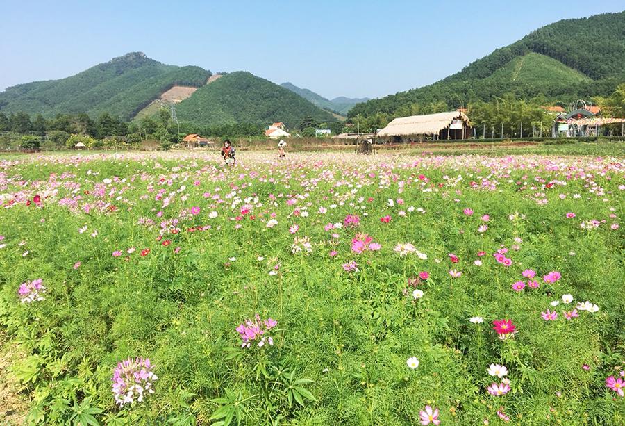 TP Hạ Long: Khi du lịch có nông nghiệp bổ trợ