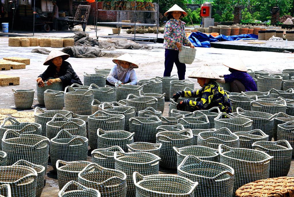 Nghề dệt cói ở Kim Sơn (Ninh Bình) và cây cói