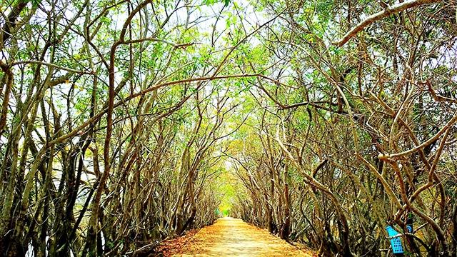 Khám phá rừng bên phá Tam Giang