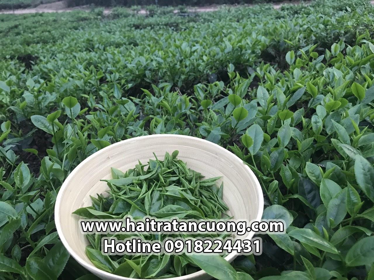 Chè Tân Cương Thái Nguyên - Thổi hồn thức uống truyền thống Việt