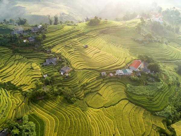 Mùa vàng miền non cao Y Tý, Lào Cai