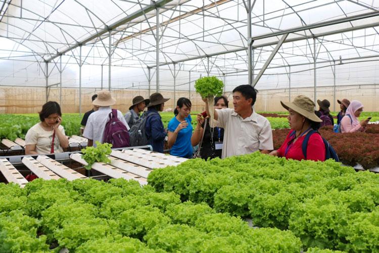 Đức Trọng: Tạo sản phẩm du lịch mới trên nền nông nghiệp sẵn có
