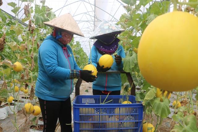 Đồng Tháp: Phát triển du lịch trải nghiệm vườn cây ăn trái bền vững