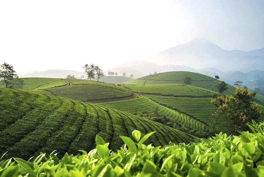 Phú Thọ: Liên kết phát triển du lịch - Nhu cầu và xu thế