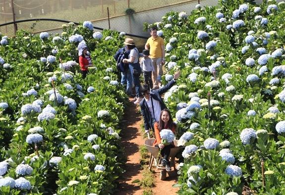 Lâm Đồng tạm dừng các dự án đầu tư mới về du lịch canh nông