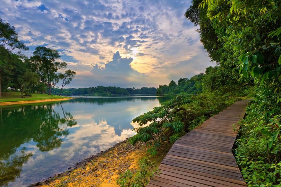 Trải nghiệm đi bộ giữa rừng tại trung tâm bảo tồn thiên nhiên ở Singapore