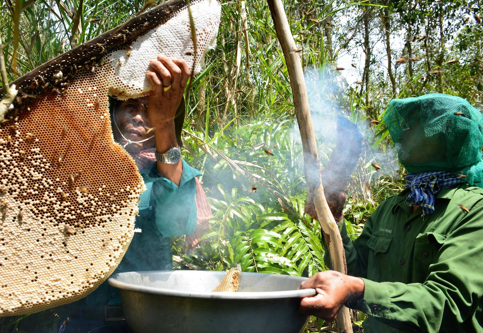 Nghề gác kèo ong - Di sản Văn hóa phi vật thể của đất rừng U Minh hạ