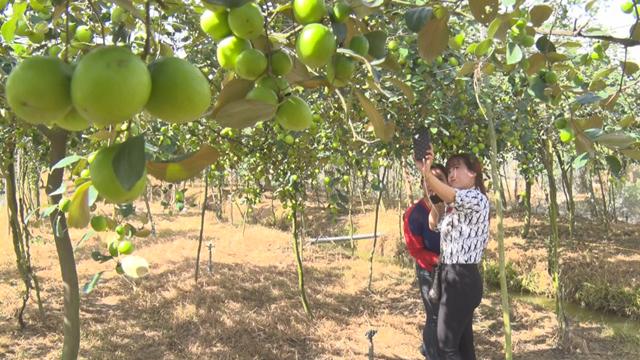 Lai Vung có thêm một điểm tham quan vườn cây ăn trái