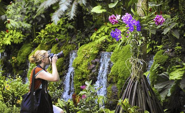 Khám phá vườn lan bốn mùa ở Singapore