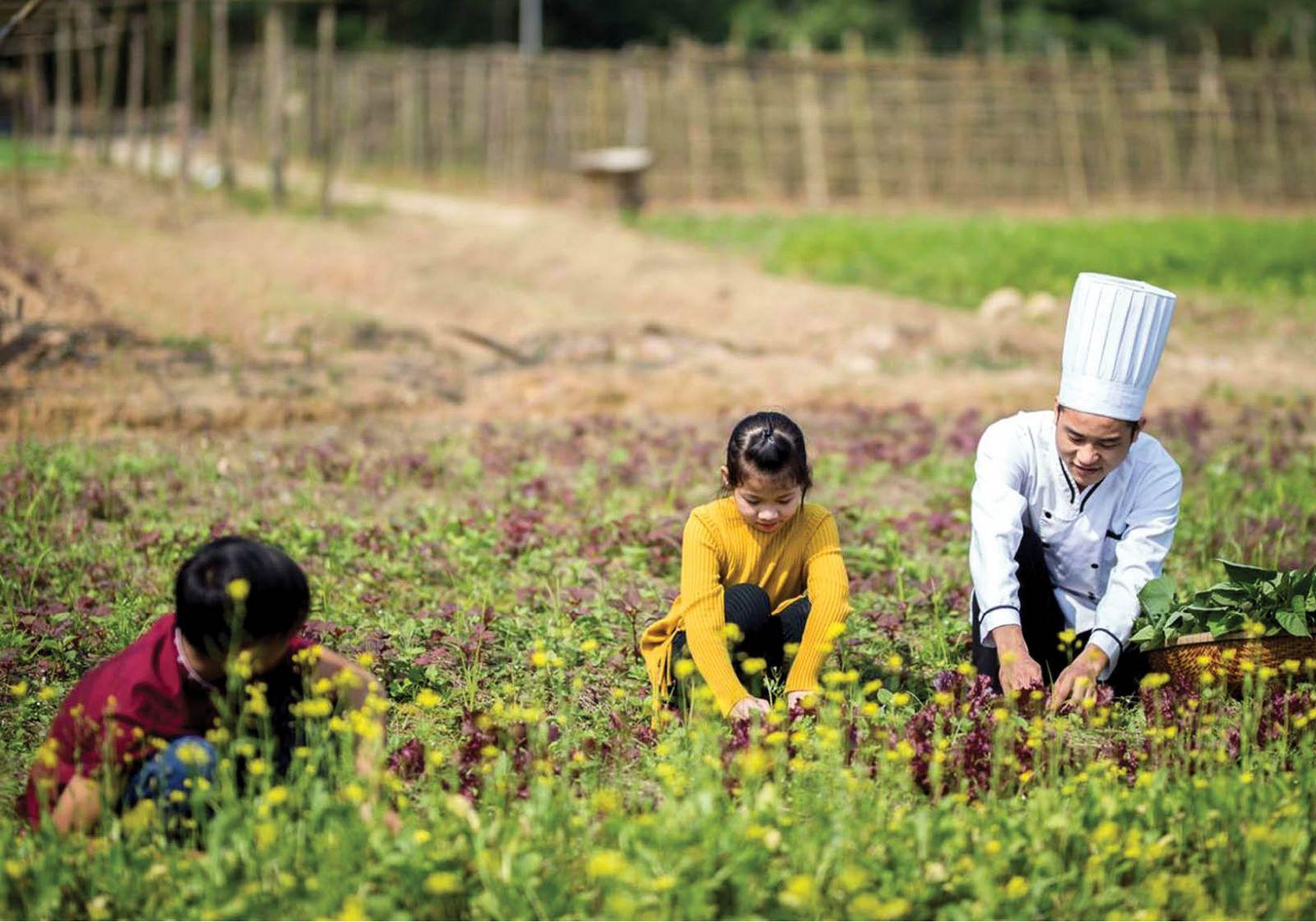 Farmstay: Mô hình du lịch cần được khai thác ở Huế