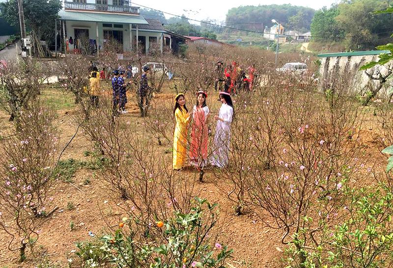 Trải nghiệm vườn đào Nông Tiến, Tuyên Quang