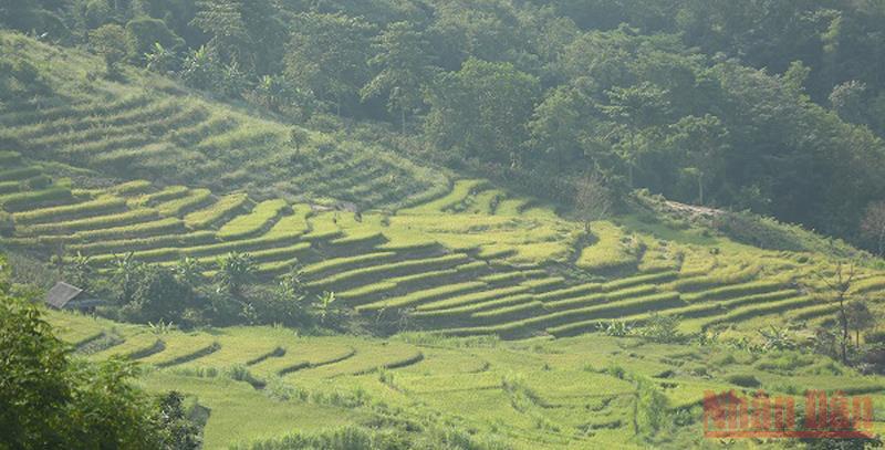 Ruộng bậc thang giữa lòng chảo Điện Biên
