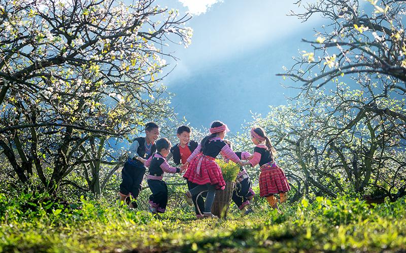 Mùa hoa ở Vân Hồ ( Sơn La)