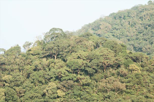 Quảng Bình: Giá trị tự nhiên độc đáo của Khu Dự trữ thiên nhiên Động Châu – Khe Nước Trong