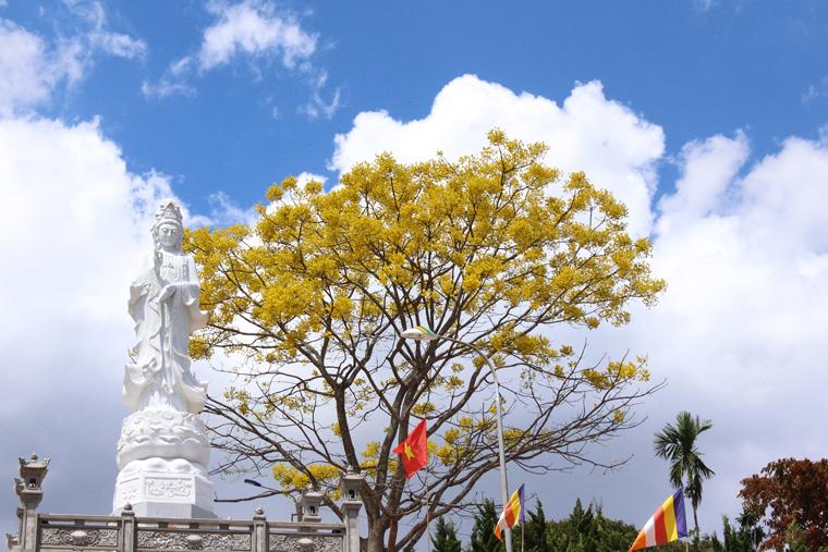 Bảo Lộc (Lâm Đồng) rực sắc phượng vàng