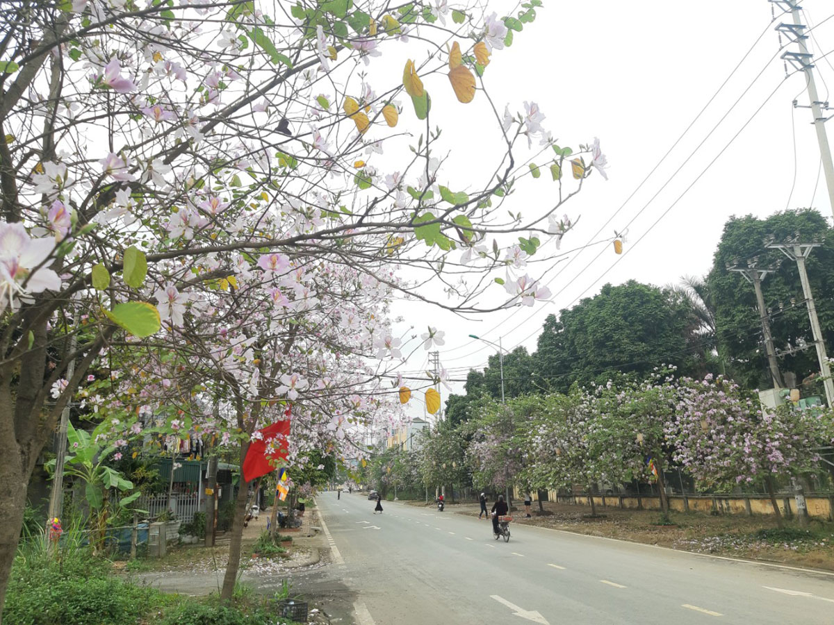 Tận hưởng sắc hoa xuân tháng ba tại Hòa Bình
