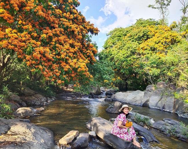Lên suối Tà Má (Bình Định) ngắm hoa rừng