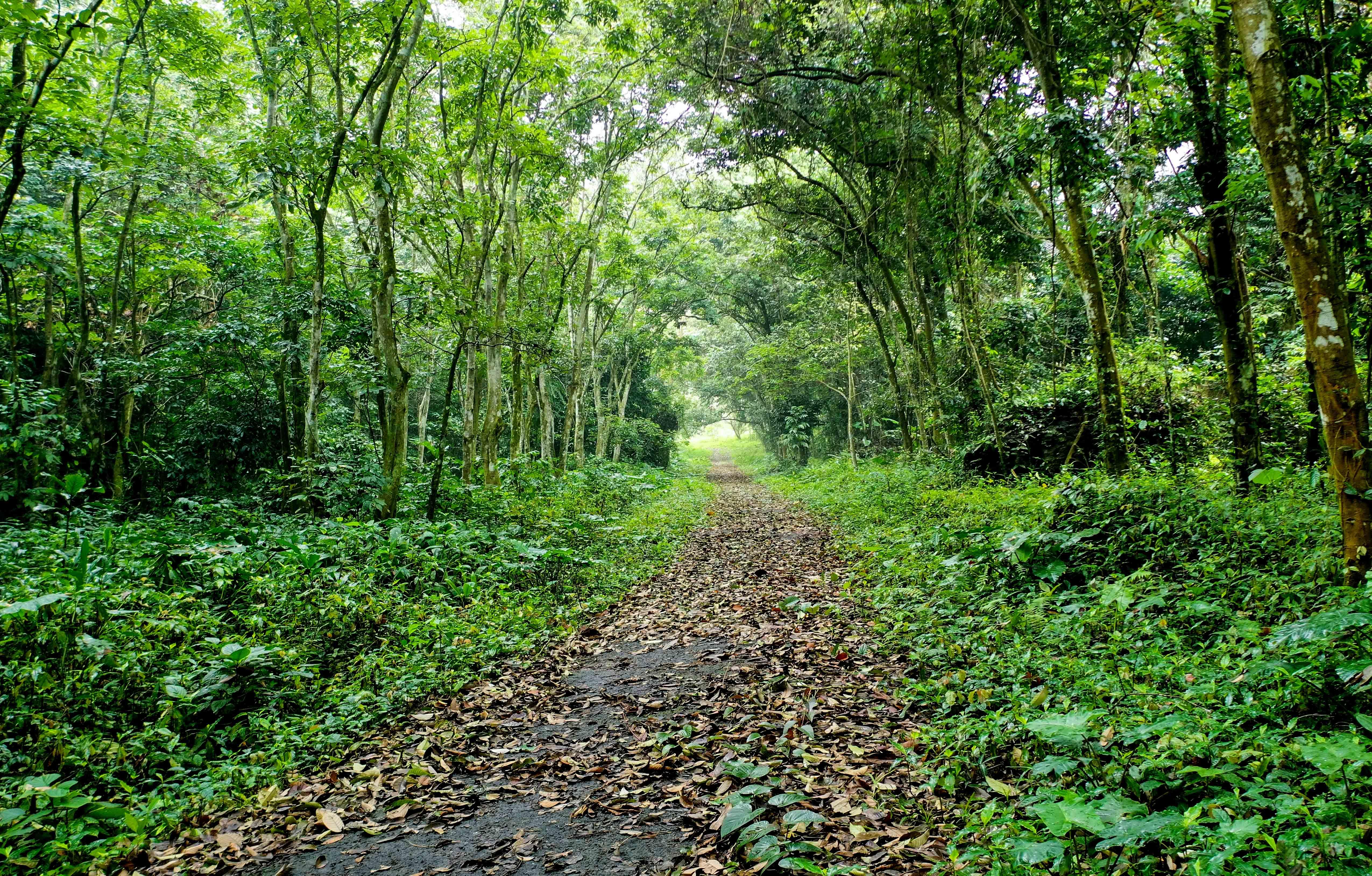 Vườn quốc gia Cúc Phương lọt top 8 vườn quốc gia ấn tượng nhất Việt Nam
