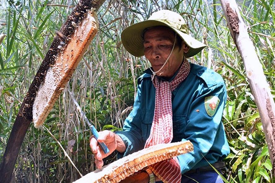 """Huyện U Minh (Cà Mau) tổ chức hoạt động sự kiện """"Hương rừng U Minh"""""""