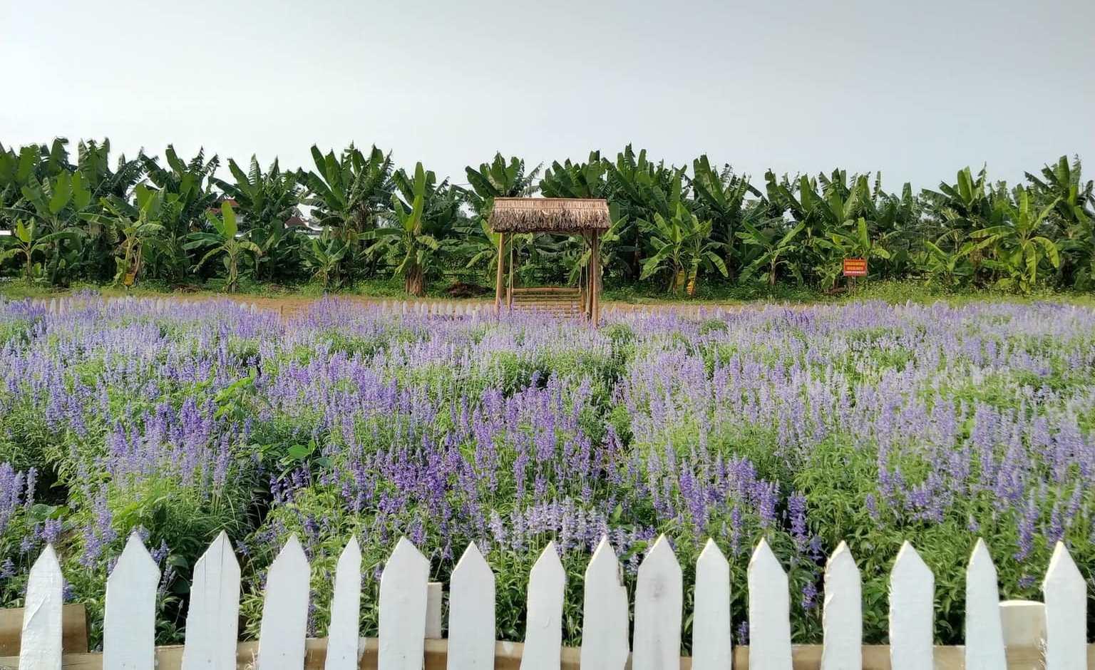 Farmstay xứ Quảng – Hướng đến du lịch xanh…