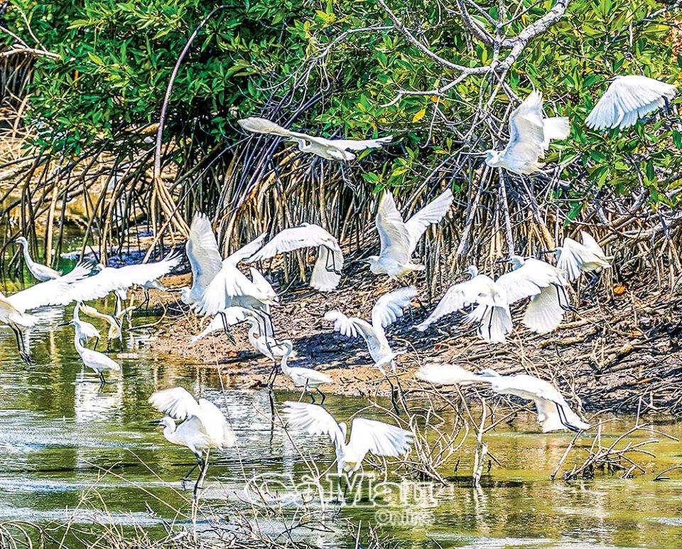 Cà Mau: Vườn chim Ngọc Hiển