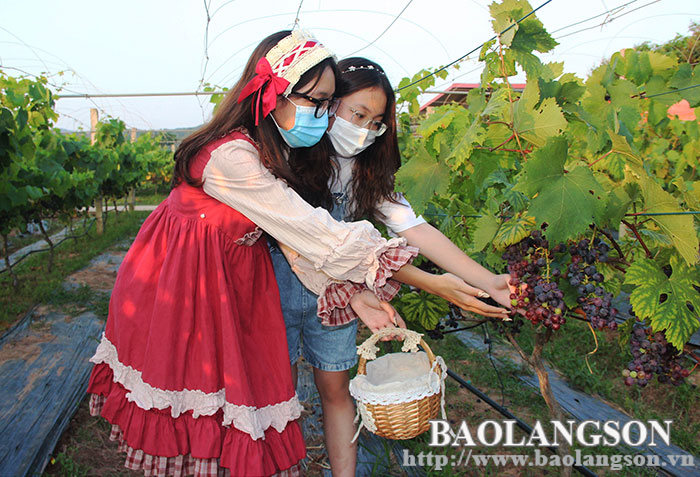 Du lịch nông nghiệp Xứ Lạng: Hướng phát triển nhiều tiềm năng