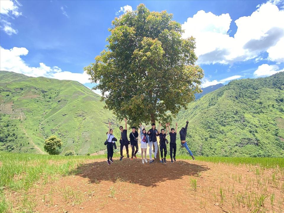 Độc đáo cây cô đơn thu hút giới trẻ ở thiên đường mây Tà Xùa