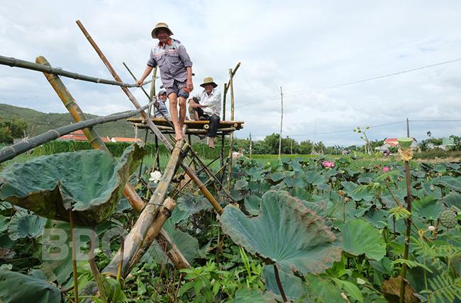 Bình Định: Về miền Tuy Phước