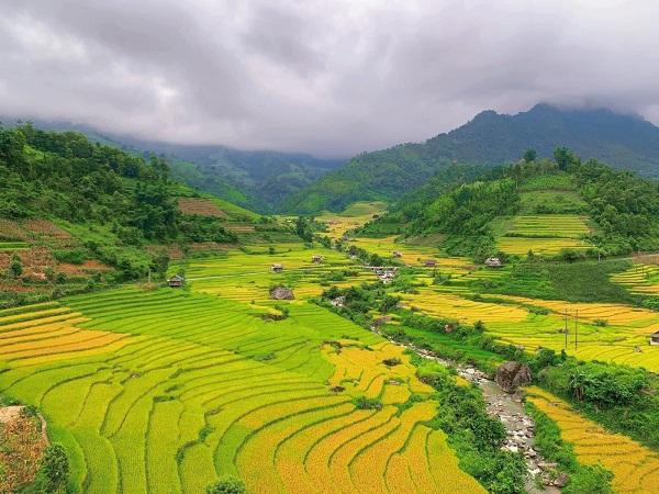Mùa vàng rực rỡ ở Nậm Cang - Sa Pa