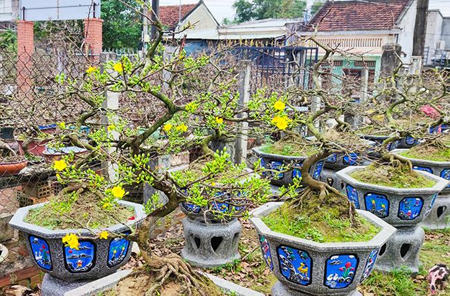 Bình Định: Làng hoa, làng nghề & làng du lịch