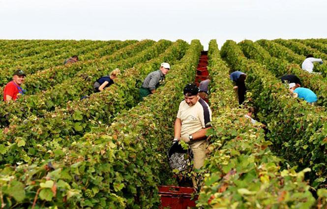 ''Đánh thức'' tiềm năng du lịch nông nghiệp: Xu hướng đầy triển vọng