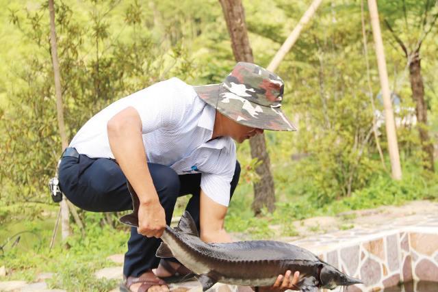 Thừa Thiên Huế: Nuôi cá xứ lạnh kết hợp làm du lịch